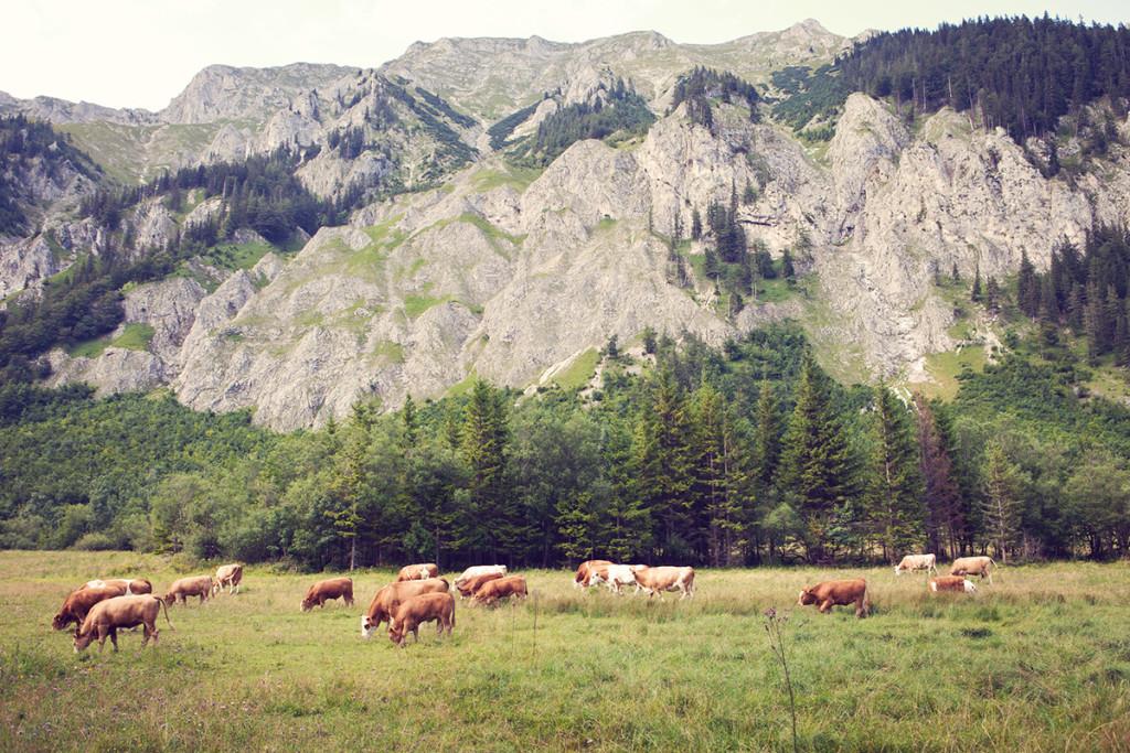 15 Seewiessen Austria