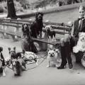 Разношерстная публика: собака на любой тренд