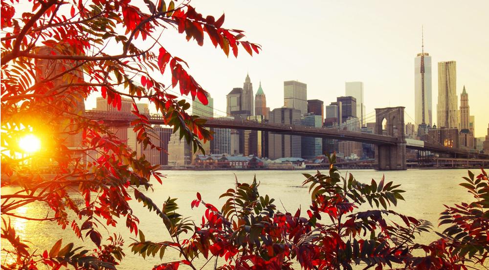 bridge-foliage-autumn-city-3162x1746