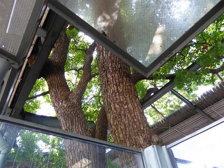 дерево станция