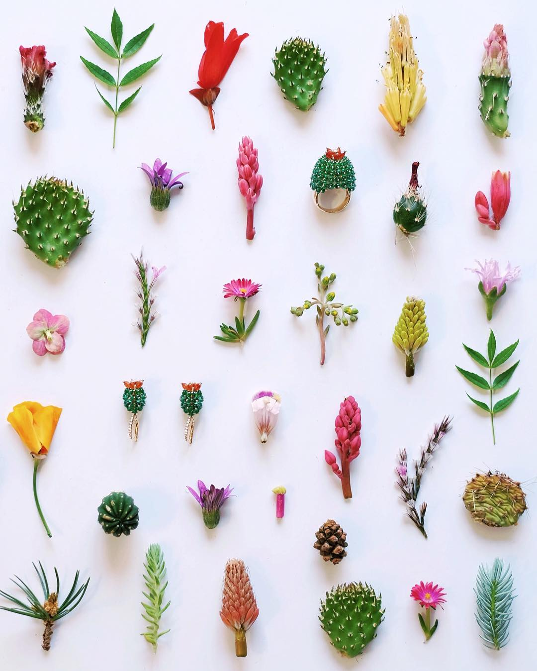 природа цветы