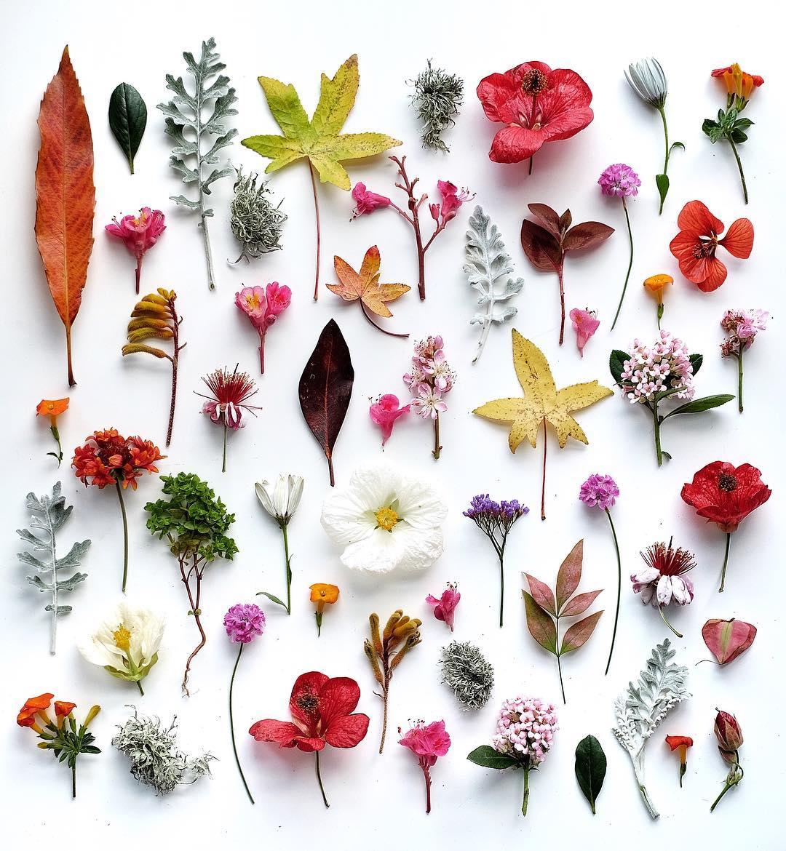 природа растения