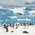 картина в Антарктиде