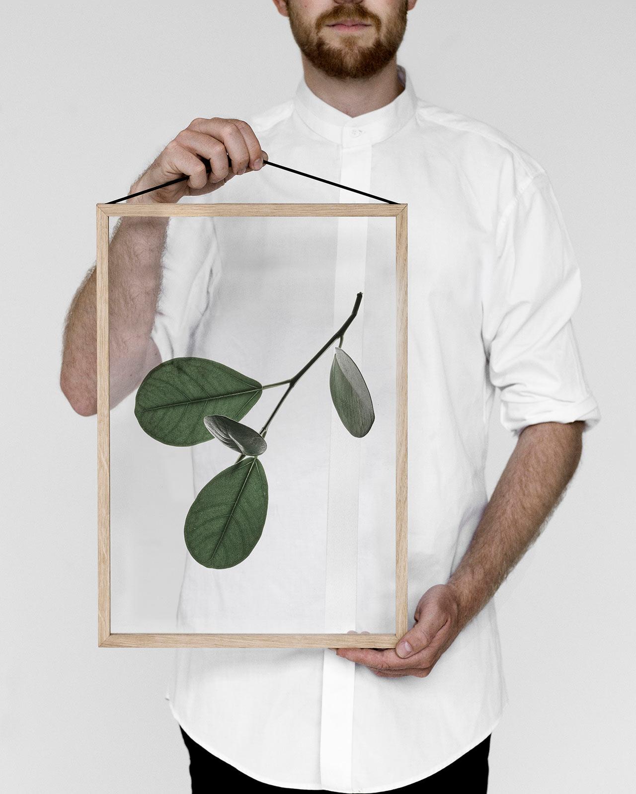 Растения в рамках