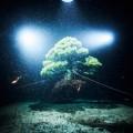 azuma-makoto-dives-into-the-unknown-4