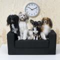 IKEA для животных