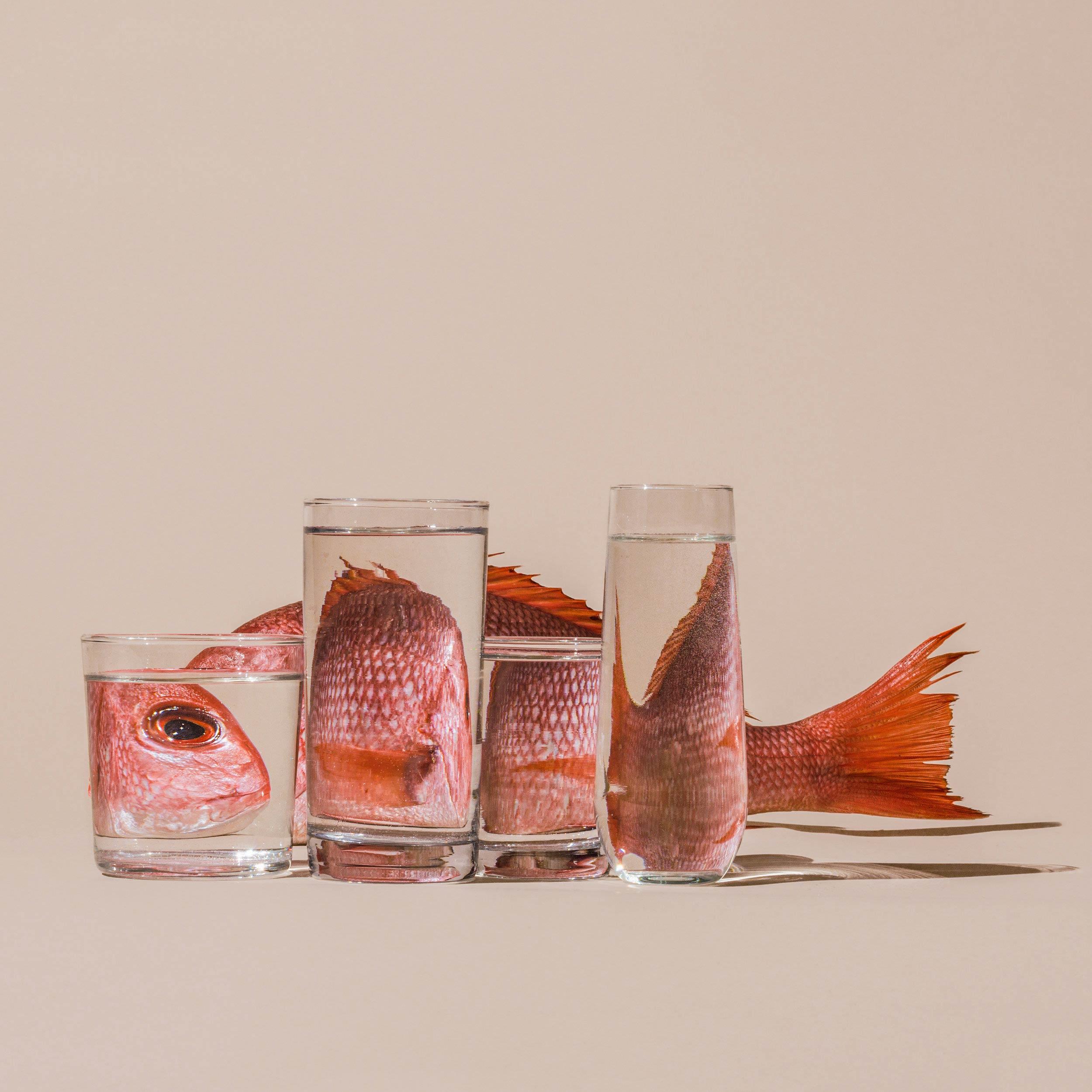 distorded-susan-sakoff-still-life-photography-1