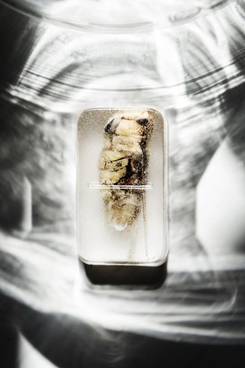 anatomy-of-a-recipe-leonie-anholts-9