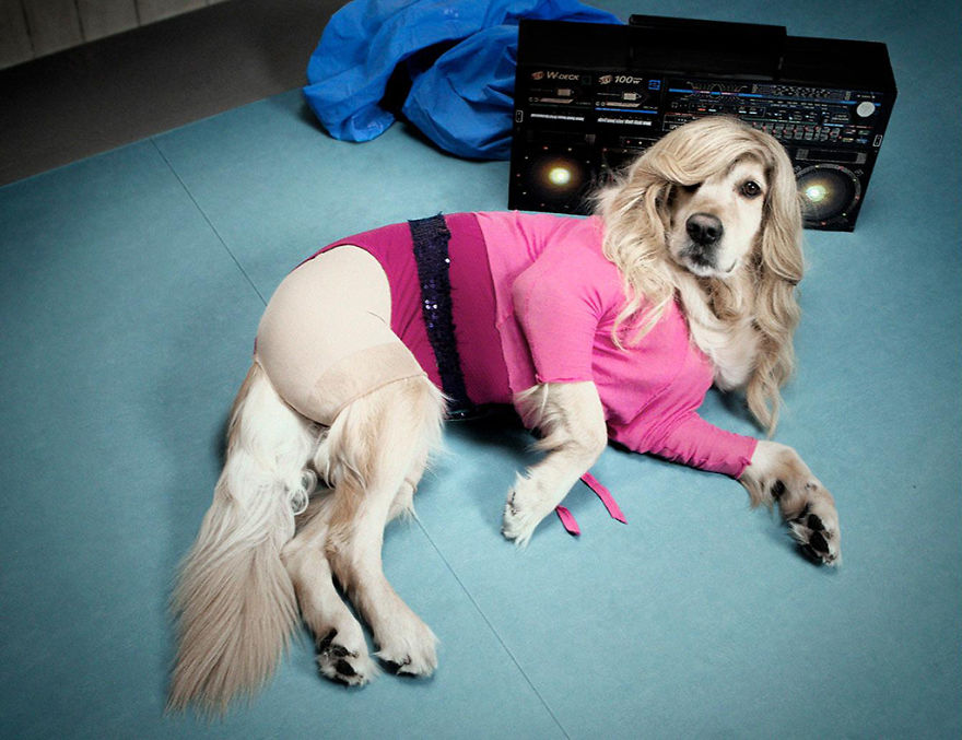 Meet-Maxdonna-the-dog-that-recreates-the-costumes-and-iconic-scenes-of-Madonna-5b45d4ab357e1__880