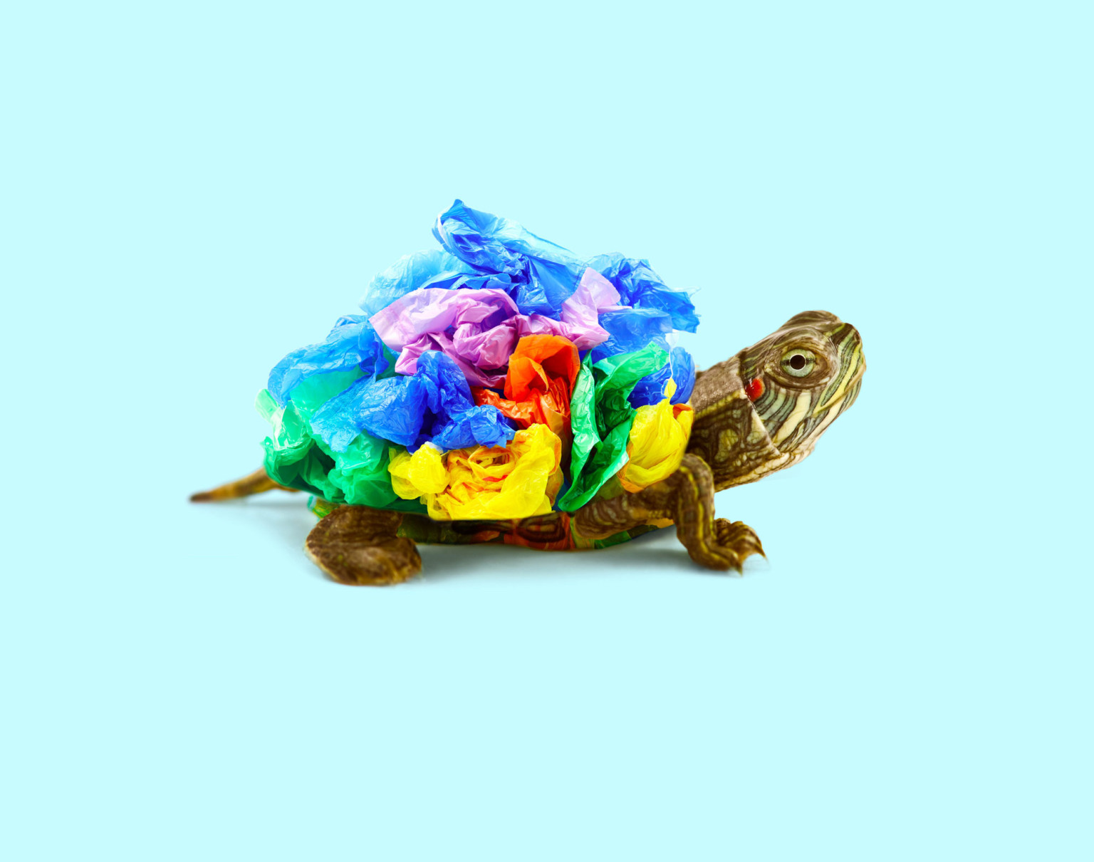 trash-turtle-768x605@2x