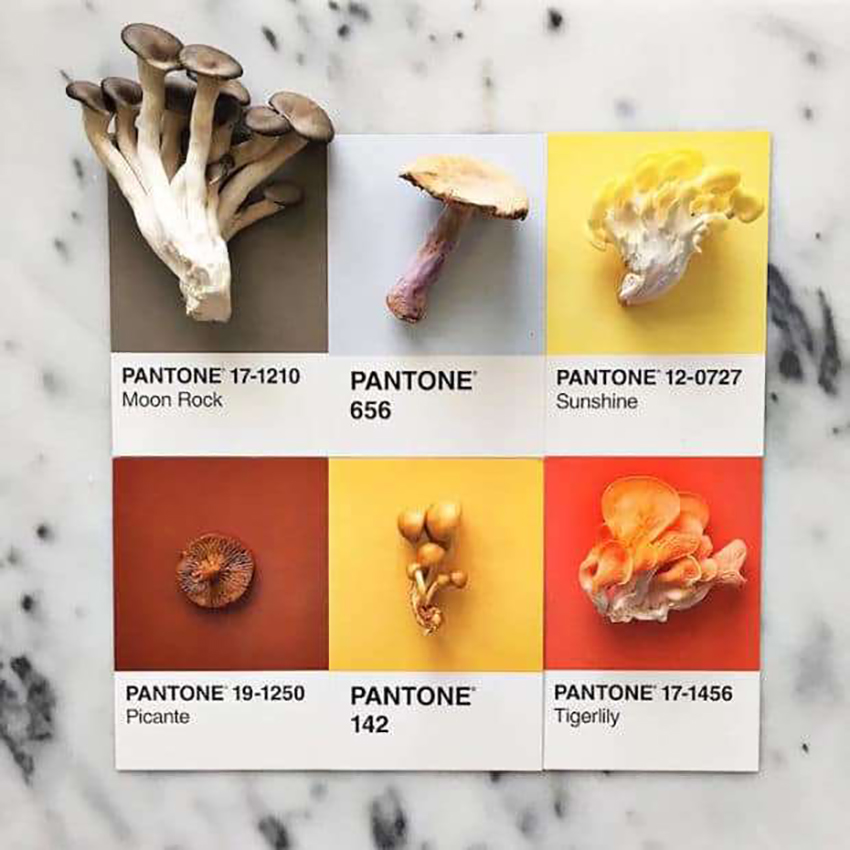 lucy-litmans-pantone-food-card-12