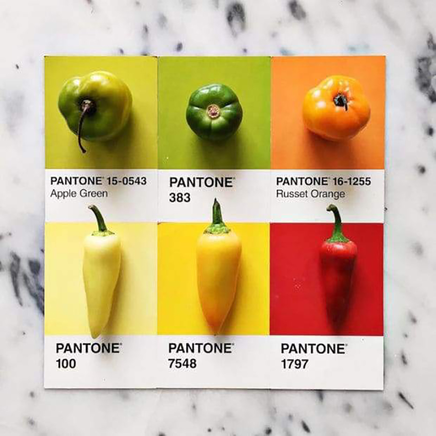 lucy-litmans-pantone-food-card-5