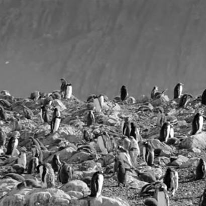 Том Йорк Антарктида