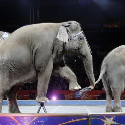 запрет диких животных в цирке