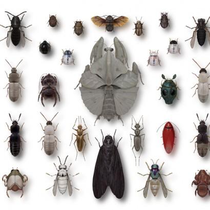 насекомые иллюстрации