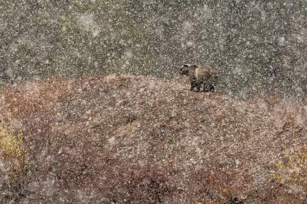Под снегом