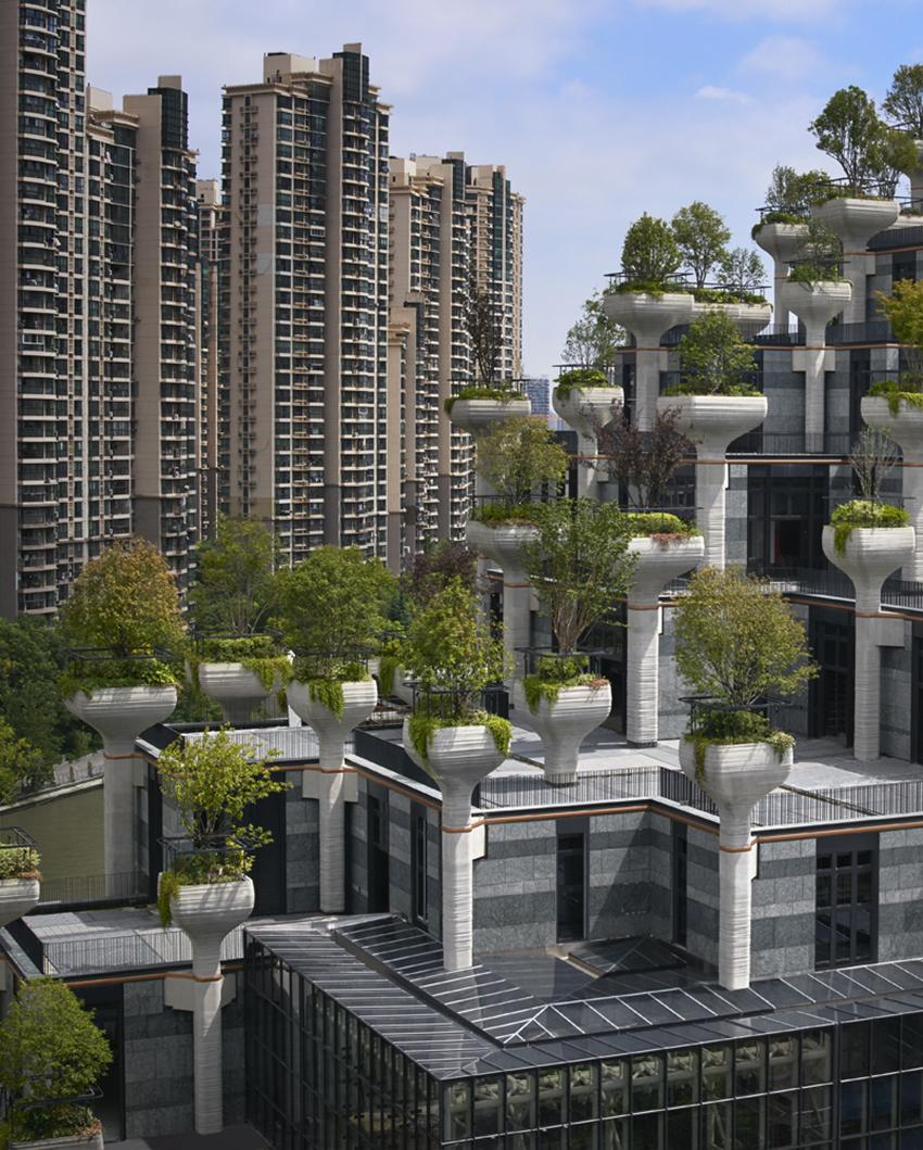 проект с деревьями