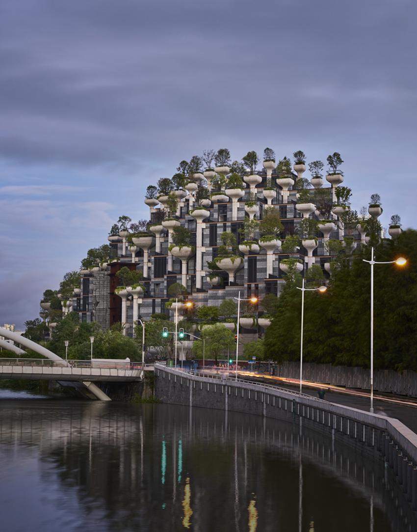 1000 деревьев