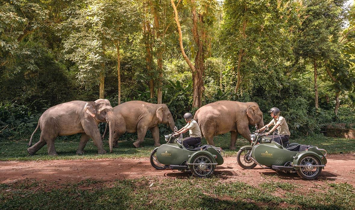 Anantara-Elephant-Camp-4