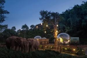 Как выглядит отель с номерами-пузырями посреди дикой природы