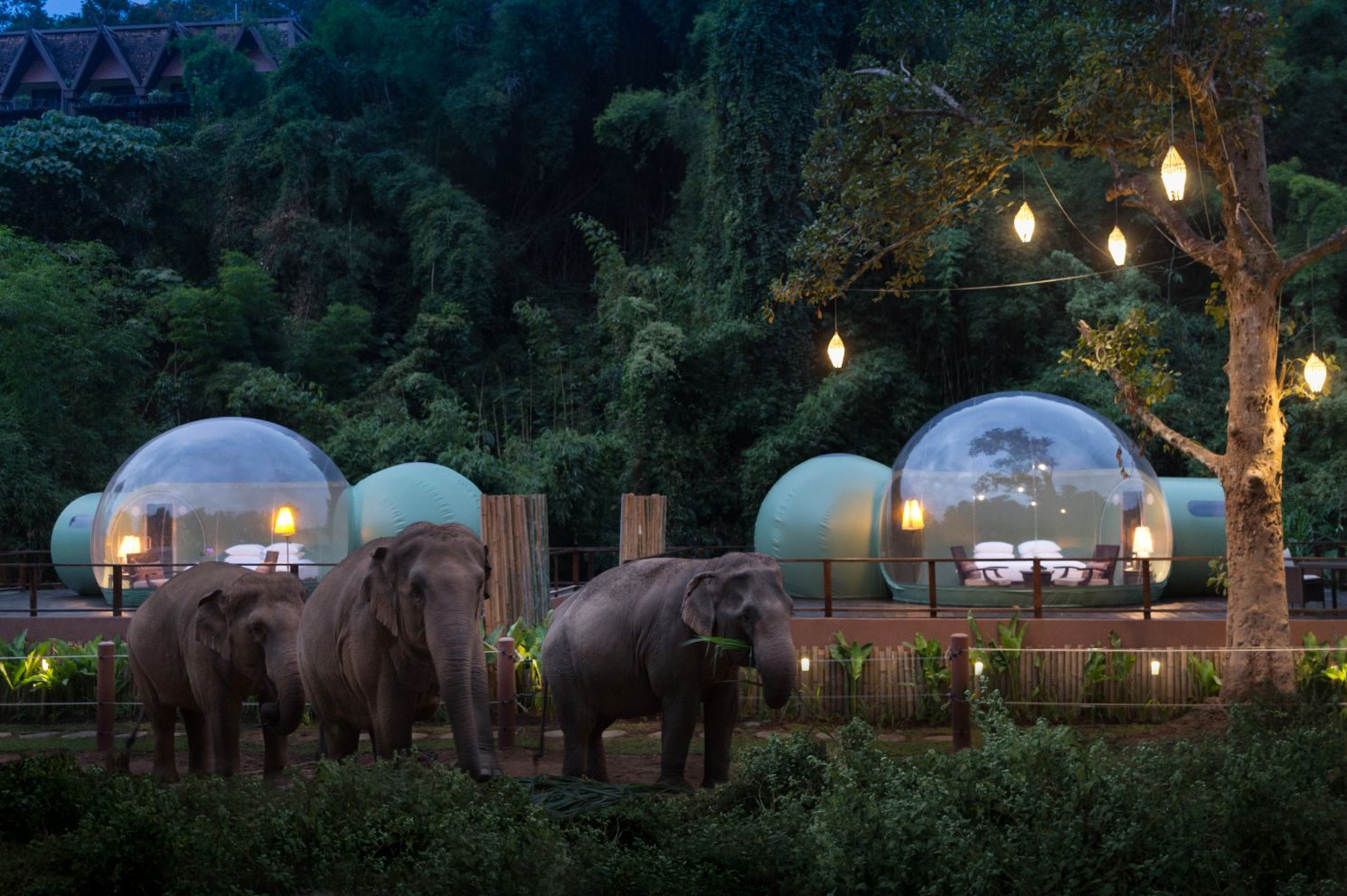 Jungle-Bubbles-hotel-thailand