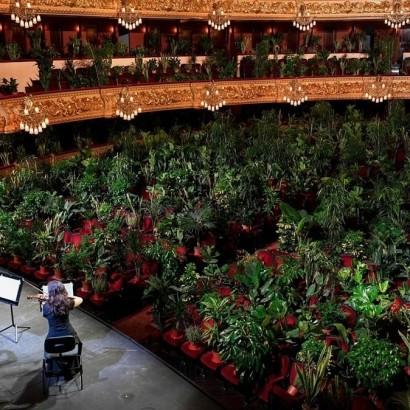 концерт для растений