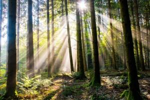 Послушайте, как звучат леса разных уголков планеты