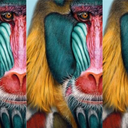 обезьяны обложка