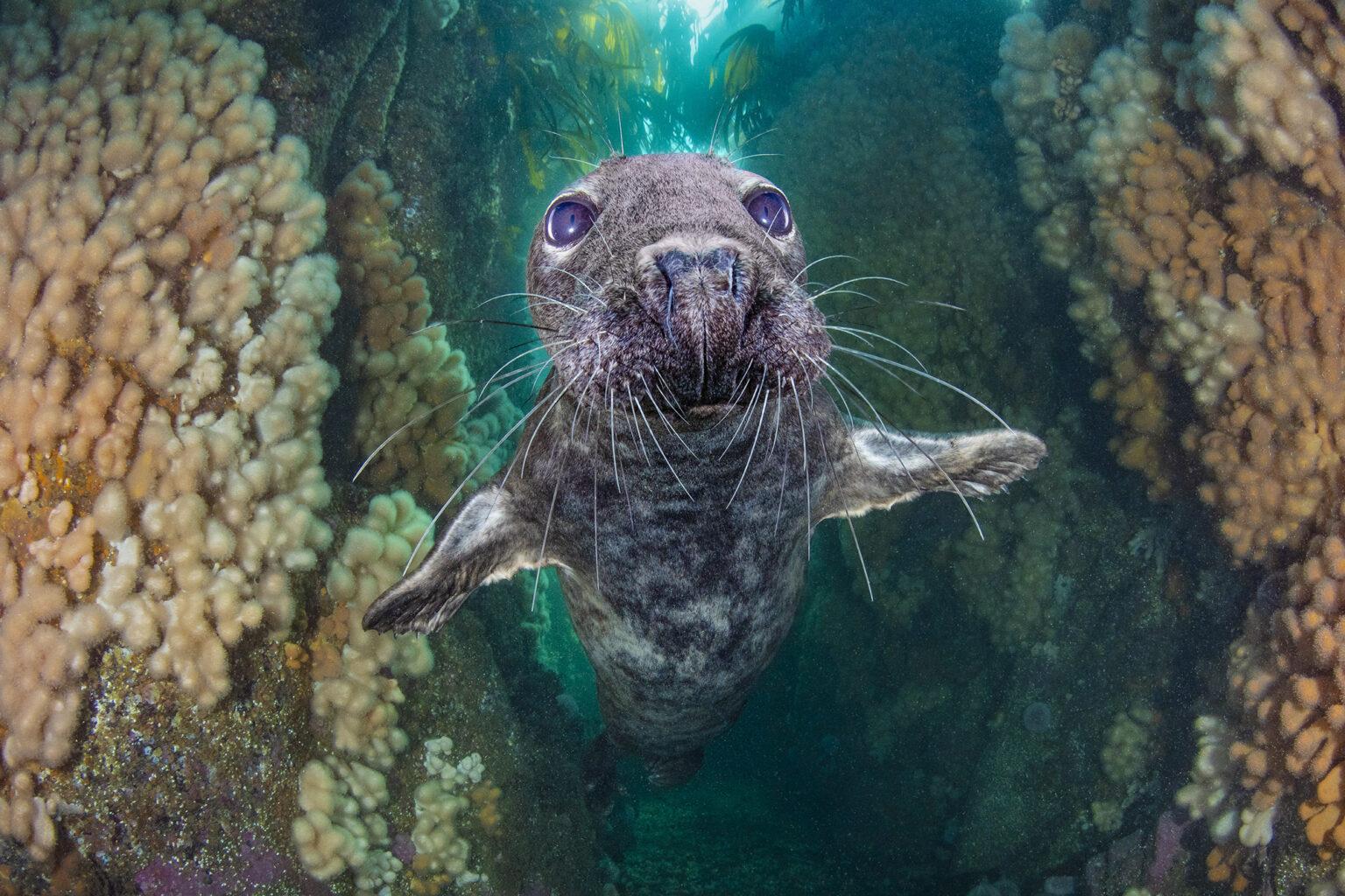 подводные фото 11