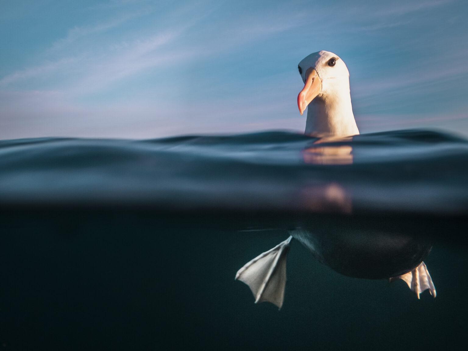 подводные фото 3