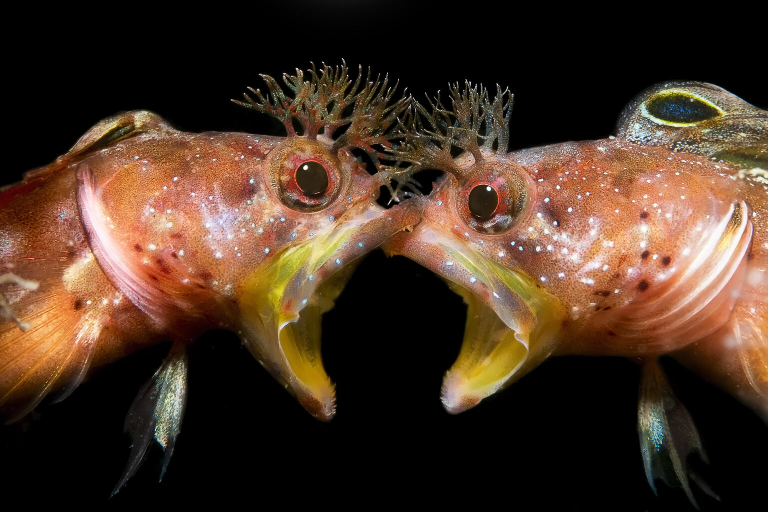 подводные фото 4