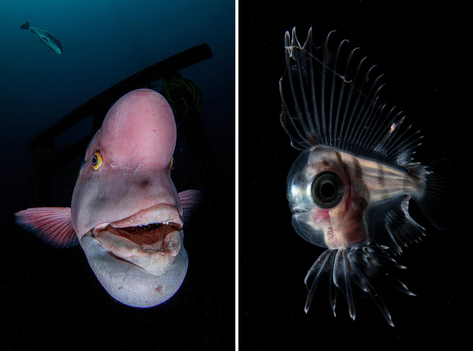 подводные фото 5